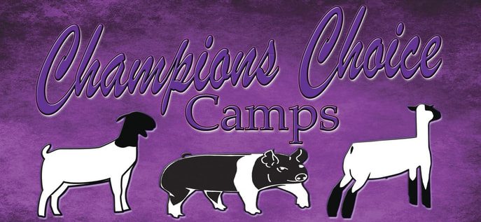 Champions Choice Camps